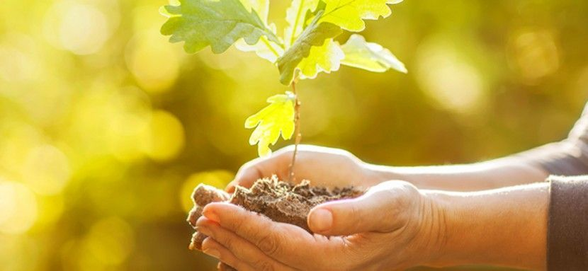 Ecología: Amor a la Naturaleza