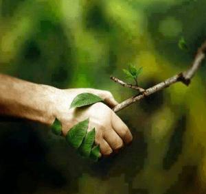RESPETO A LA NATURALEZA